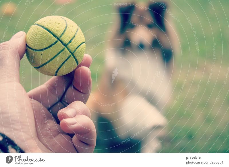 Dog Summer Joy Animal Love Movement Meadow Grass Sports Playing Garden Flying Leisure and hobbies Communicate Beautiful weather Athletic
