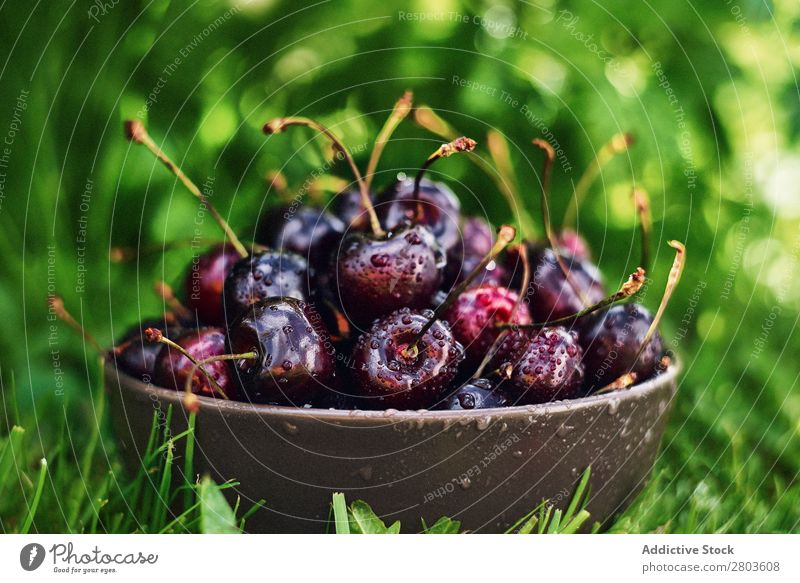 Bowl with wet cherries on grass Fresh Wet Grass Garden Healthy Mature Sweet Fruit Summer Berries Food Raw Dessert Organic Juicy Tasty Delicious yummy Vegan diet