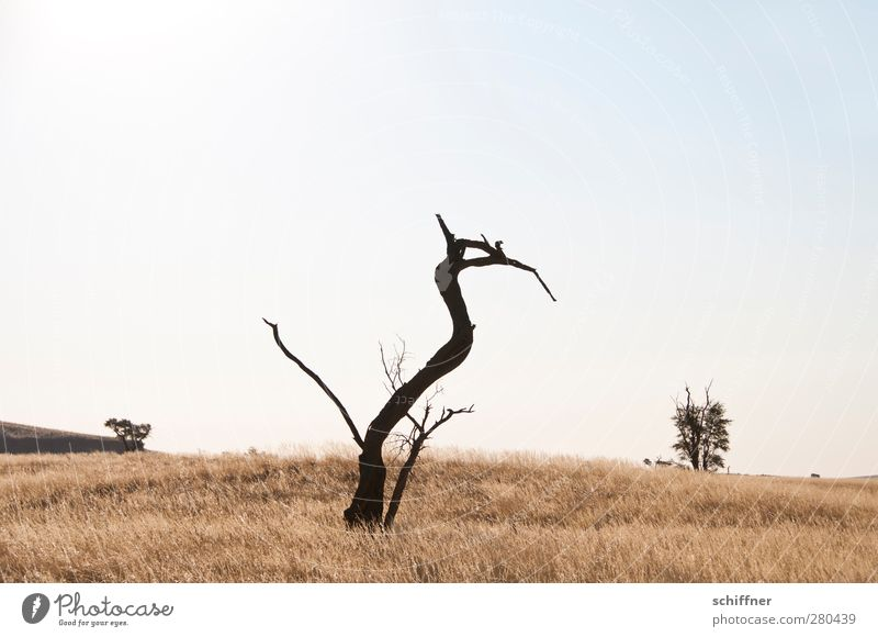 Nature Plant Tree Animal Landscape Environment Death Grass Exceptional Stand Bushes Branch Desert Cloudless sky False Steppe