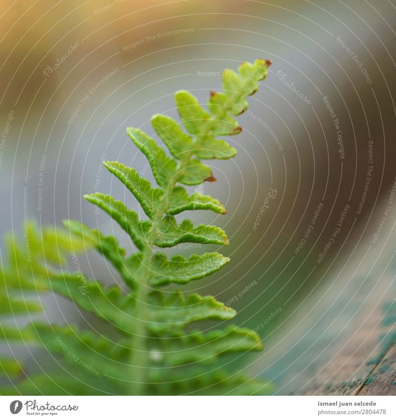 green fern plant leaf Nature Summer Plant Green Leaf Winter Background picture Autumn Spring Garden Decoration Consistency Fragile Fern Floral