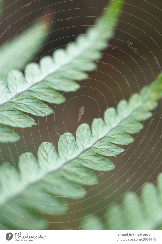 green fern plant leaves Fern Green Plant Leaf Abstract Consistency Garden Floral Nature Decoration Exterior shot Fragile Background picture Winter Autumn Spring