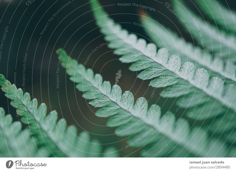 green fern plant leaves Nature Summer Plant Green Leaf Winter Background picture Autumn Spring Garden Decoration Consistency Fragile Fern Floral