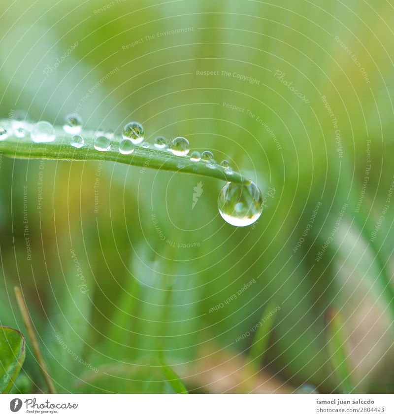 drop on the green leaf Grass Plant Leaf Green Drop Rain Glittering Bright Garden Floral Nature Abstract Consistency Fresh Exterior shot Background picture