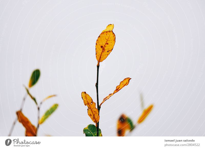colorful plant leaves Leaf Multicoloured Colour Garden Floral Nature Decoration Abstract Consistency Fresh Exterior shot background Beauty Photography Fragile