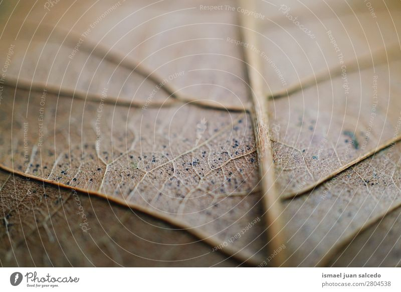 brown leaf texture Nature Summer Leaf Winter Autumn Spring Garden Brown Decoration Fresh Beauty Photography Consistency Fragile Floral