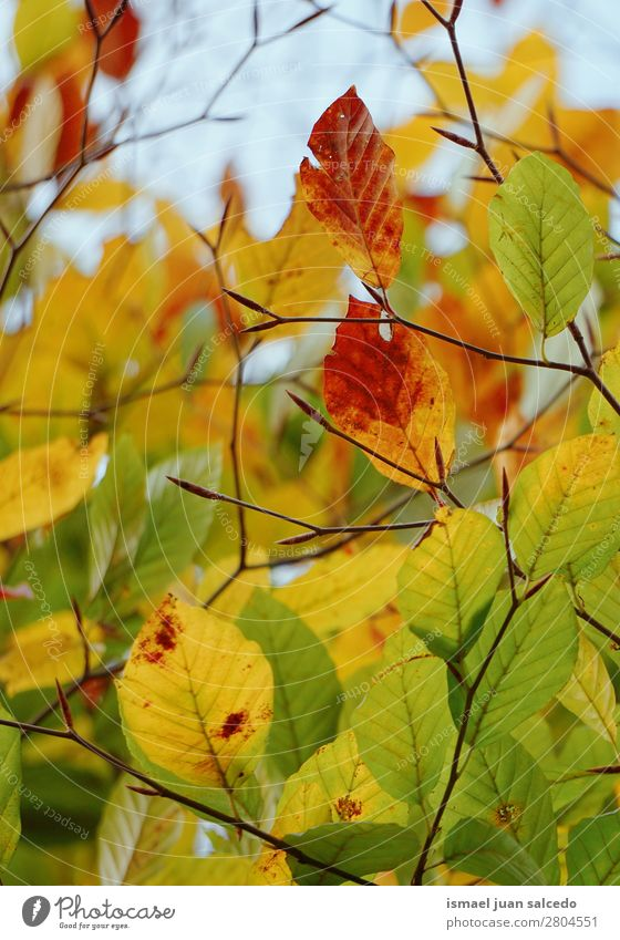 colorful tree leaves Nature Green Tree Leaf Winter Autumn Yellow Brown Branch Beauty Photography Consistency Fragile