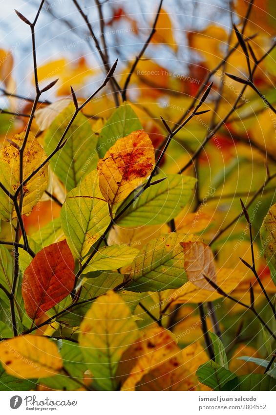 colorful tree leaves Nature Green Tree Leaf Winter Autumn Yellow Brown Beauty Photography Consistency Fragile