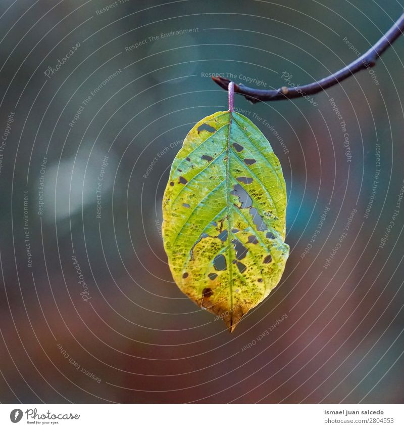 green tree leaf Nature Green Tree Leaf Winter Autumn Branch Beauty Photography Consistency Fragile