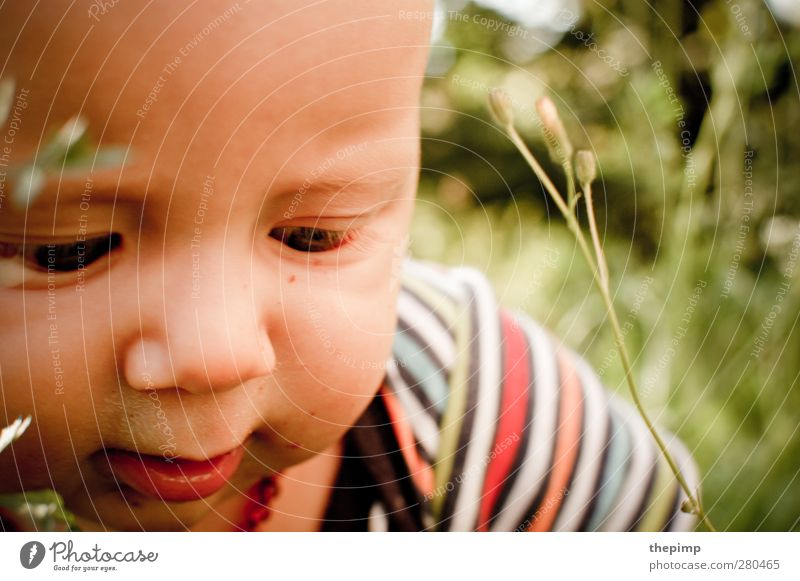 back in... Masculine Baby Boy (child) Face 1 Human being 0 - 12 months Nature Grass Curiosity Cute Happy Joie de vivre (Vitality) Spring fever Interest