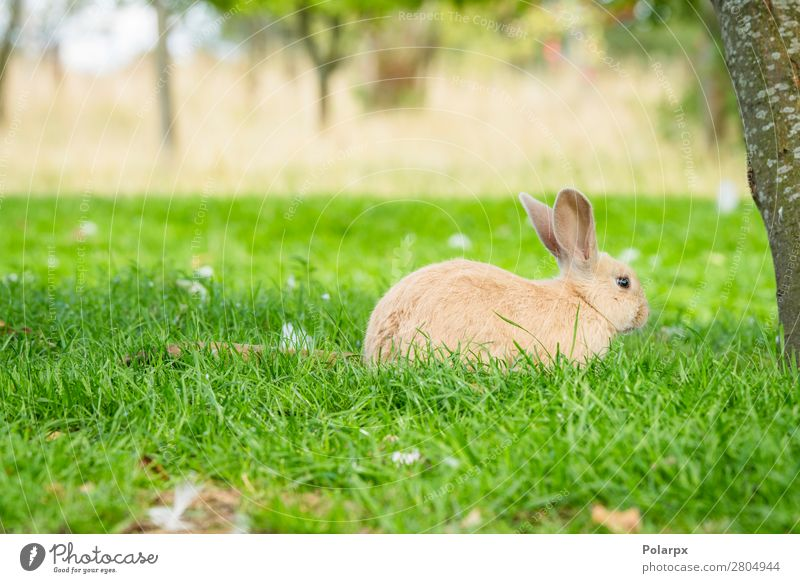 Cute bunny rabbit sitting in green grass Eating Beautiful Summer Garden Easter Environment Nature Animal Drought Grass Leaf Meadow Fur coat Pet Small Natural