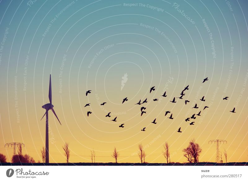 Sky Nature Blue Animal Landscape Far-off places Yellow Environment Air Horizon Bird Field Wind Flying Climate Wild animal