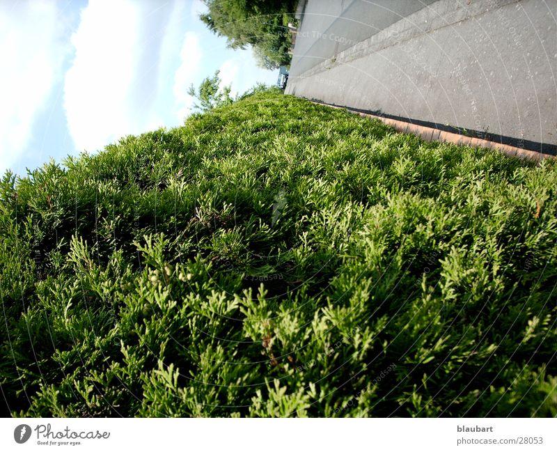 The green road Green Hedge Street