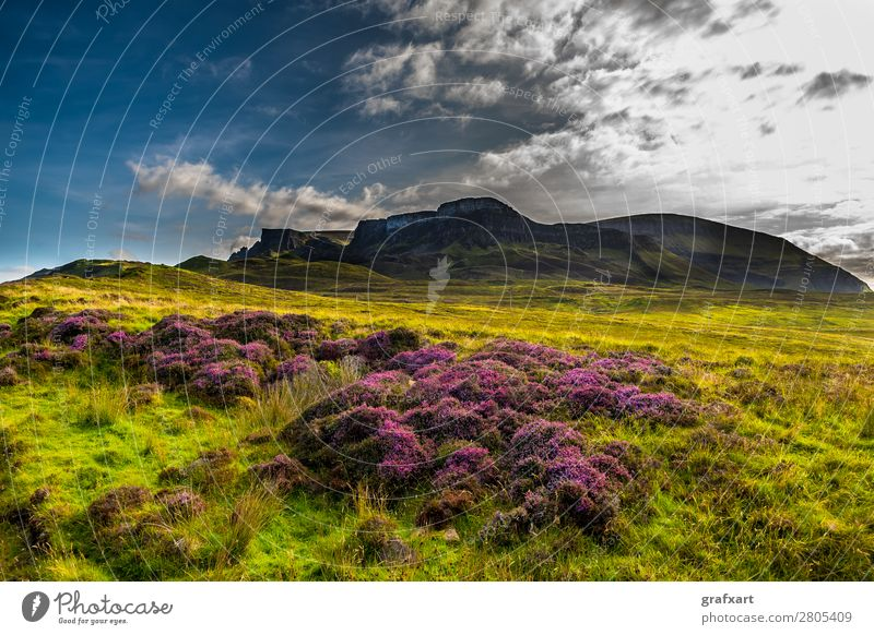 Old Man Storr Rock Formation on the Isle of Skye in Scotland Mountain Famousness Versatile Blossoming Flower Loneliness Geology Peak Great Britain