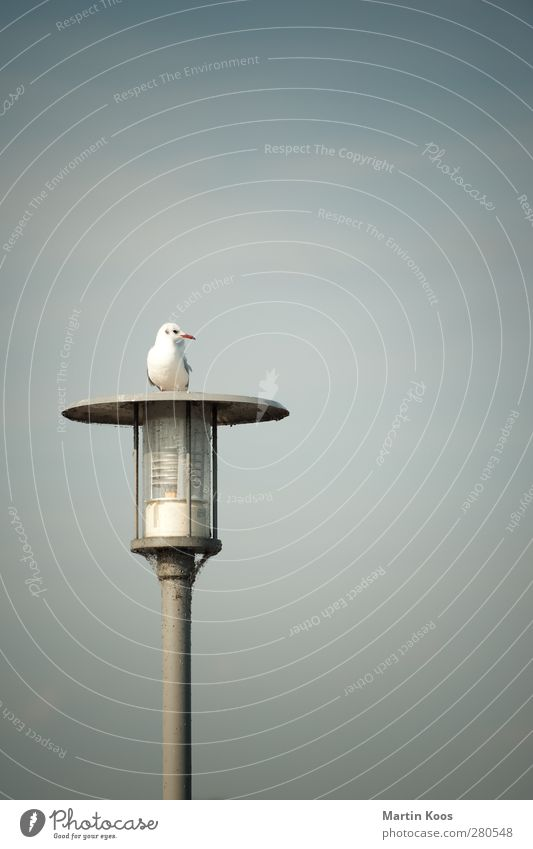 platform Animal Bird Seagull 1 Lantern Looking Sit Blue White Colour photo Subdued colour Exterior shot Deserted Copy Space top Neutral Background Day