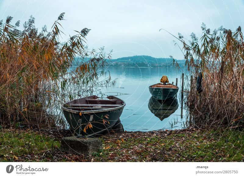 Arrival Vacation & Travel Tourism Landscape Autumn Common Reed Lakeside Lake Constance Boating trip Rowboat Moody Idyll Calm Horizon Colour photo Exterior shot