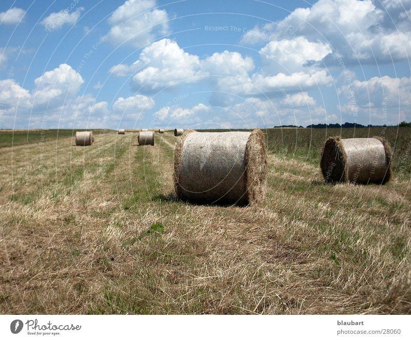 Field Hay bale