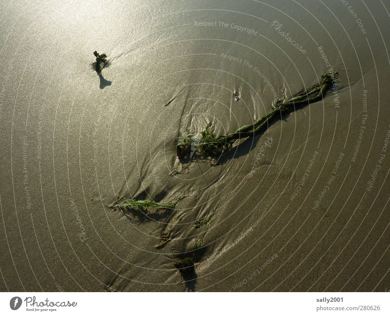 artistic mudflat... Beach Ocean Environment Sand Mud flats Low tide Tide Lie Power Calm Rope Flotsam and jetsam Twilight Dusk Tracks Colour photo Exterior shot