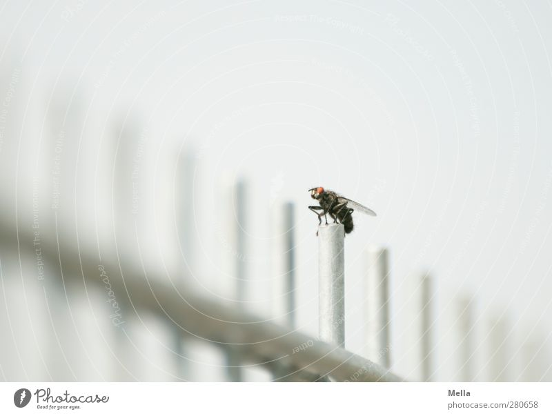 starting position Environment Animal Fly Insect 1 Rod Grating Fence Metal Crouch Sit Bright Small Gray Equal Break Colour photo Exterior shot Deserted