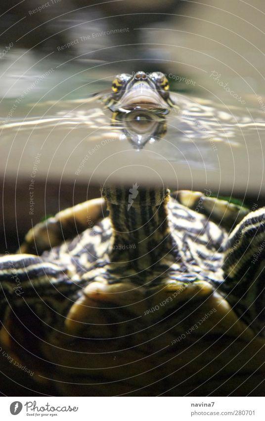 Water Green Animal Air Swimming & Bathing Observe Zoo Pet Breathe Neck Aquarium Feeding Turtle