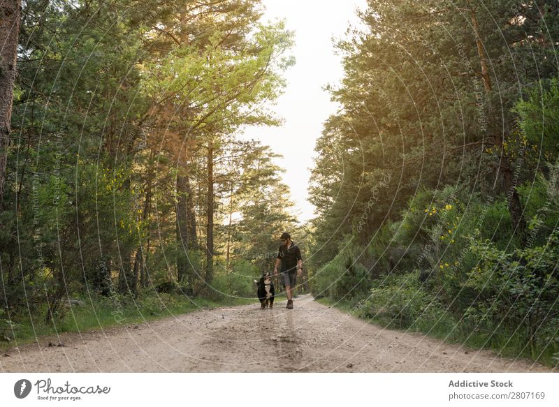 Man of adventure with his dog in the forest on a sunny spring day Forest Nature Walking Mountain trekking Human being Youth (Young adults) Sunbeam Hiking Park
