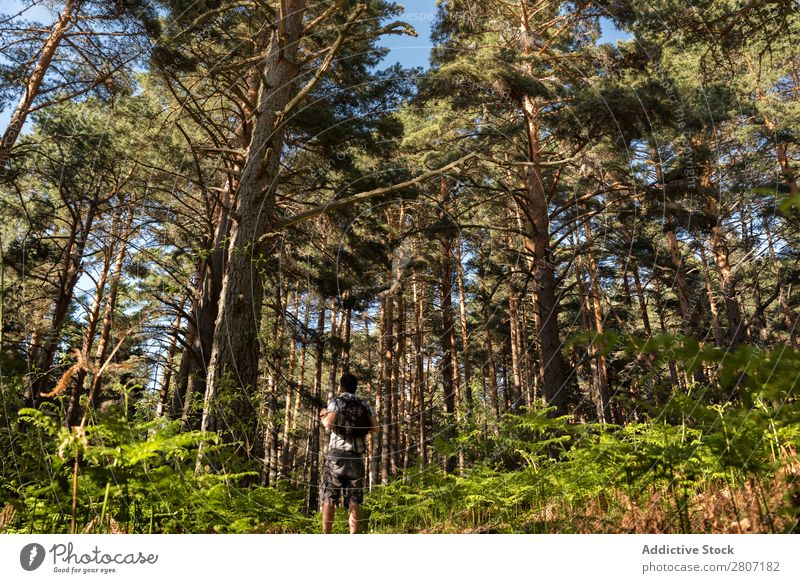 Man of adventure in the forest on a sunny spring day Forest Nature Walking Mountain trekking Human being Youth (Young adults) Sunbeam Hiking Park Beautiful