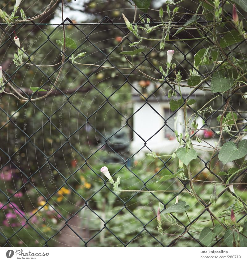 Fenced I Calm Leisure and hobbies Garden Environment Nature Plant Flower Blossom Wire netting Blossoming Growth Natural Wild Garden plot Garden allotments
