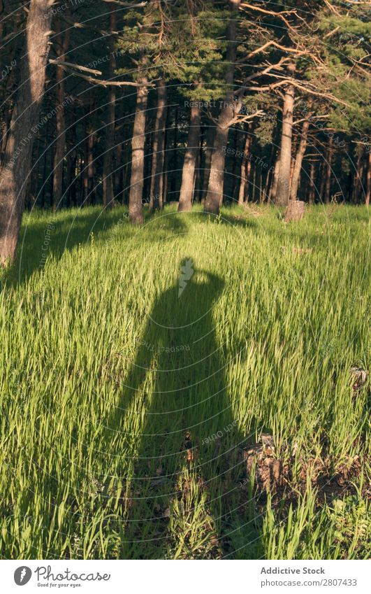 Shadow man on grass Man Long Grass Human being Green Conceptual design Silhouette Nature Background picture Light Cast Bright Image Landscape Exterior shot