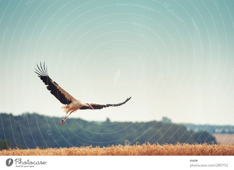 Sky Nature Blue Summer Animal Landscape Yellow Environment Movement Freedom Happy Bird Field Flying Feather Beautiful weather