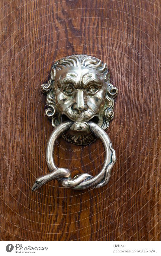 Beautiful ornate silver doorknocker Style Design Head Art Work of art Door Animal Snake Animal face Wood Metal Ornament Old Glittering Wild Brown Silver Exotic