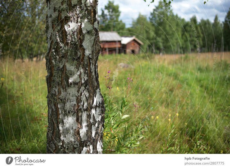 Swedish farmhouses Vacation & Travel Tourism Far-off places Summer Summer vacation Hiking Advancement Future Renewable energy Environment Nature Landscape