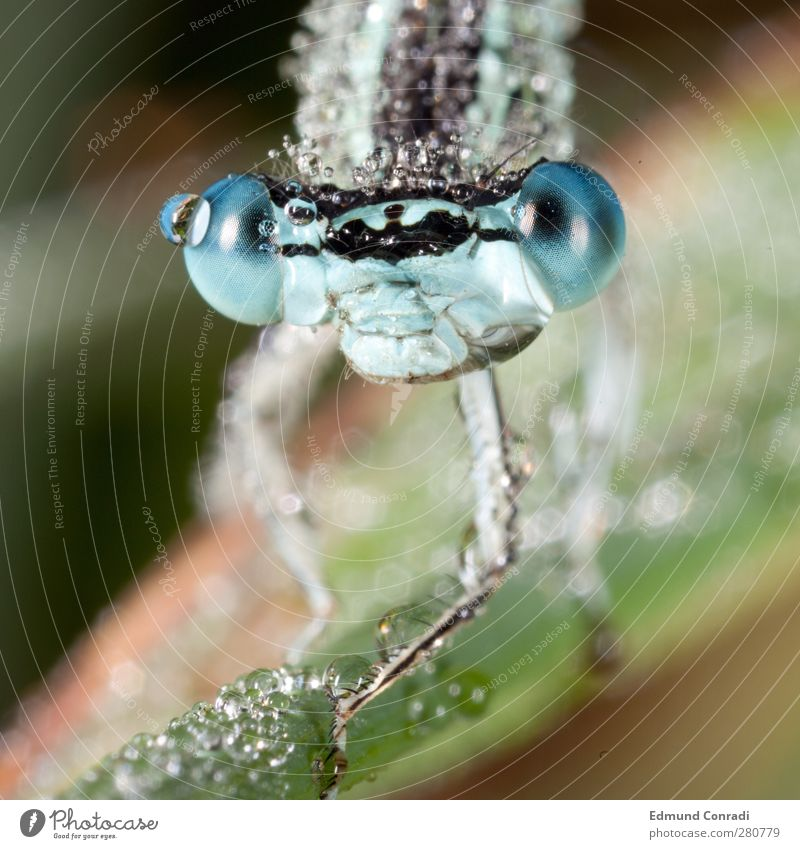 Animal Wild animal Idyll Animal face Hunting Dew Dragonfly