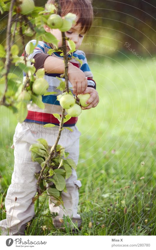 Human being Child Green Summer Tree Leaf Meadow Autumn Playing Garden Healthy Infancy Fruit Food Nutrition Sweet