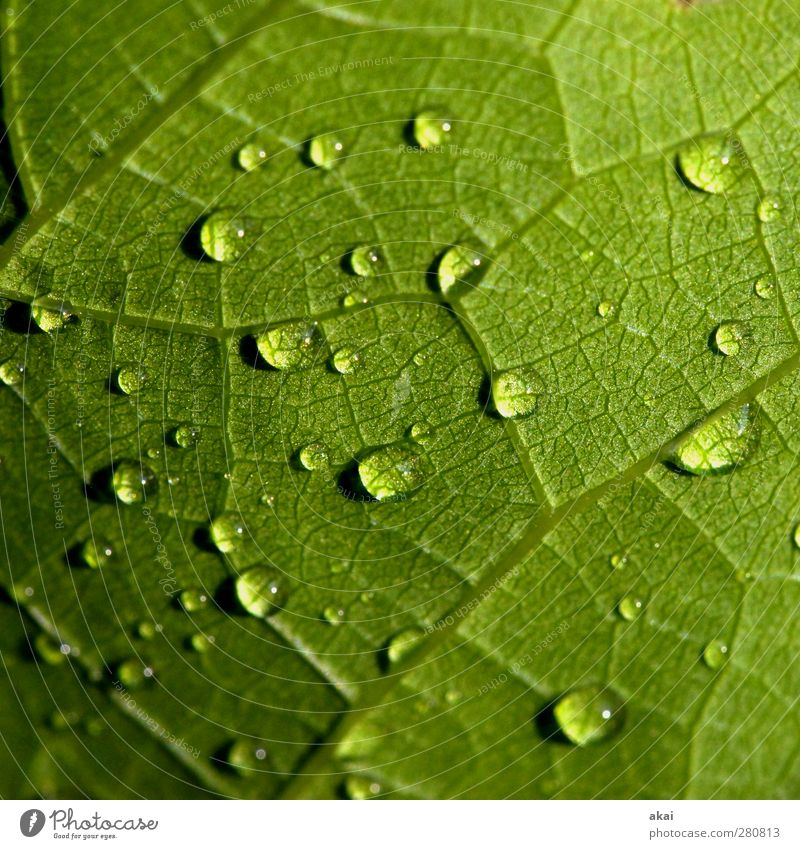 Nature Water Green Plant Leaf Rain Wet Drop Bad weather Natural growth