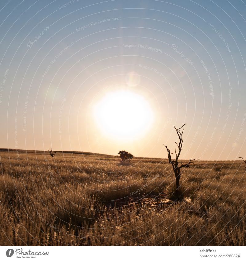 Where's the sundowner? Environment Nature Landscape Cloudless sky Sun Sunrise Sunset Sunlight Drought Grass Desert Dry Steppe Tree trunk Tree stump Death