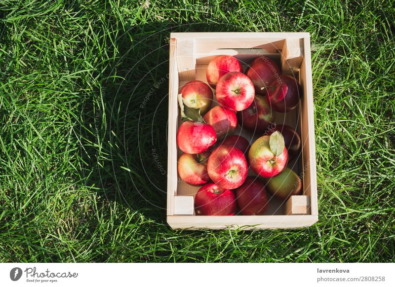 Flatlay with fresh ripe red apples in wooden box flat lay Grass Wood Box Farmer Mature Colour Fresh Exterior shot Diet Fruit Delicious Vegetarian diet
