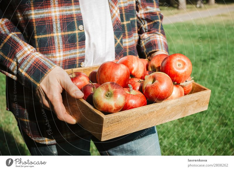Man in plaid shirt holding wooden box with organic apples Healthy Eating Summer Green Red Hand Food Wood Autumn Natural Grass Fresh Agriculture Harvest Apple