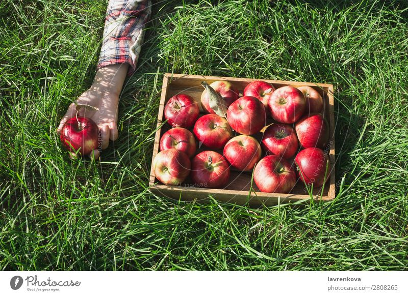Flatlay with red apples in wooden box and woman's hand Woman Nature Healthy Eating Colour Green Red Hand Food Wood Natural Grass Garden Fruit Fresh Delicious
