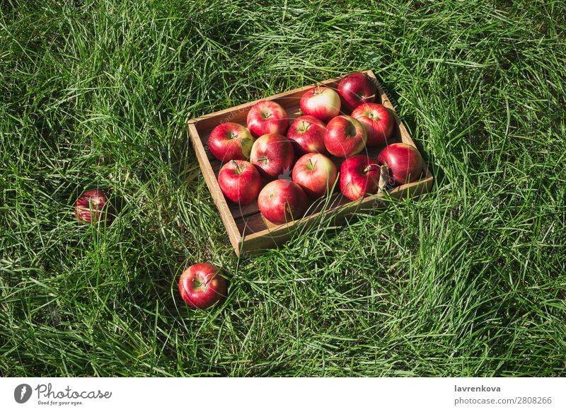 Flatlay with fresh ripe red apples in wooden box Agriculture Apple Autumn Basket Box Colour Delicious Diet Farmer flat lay Food Fresh Fruit Garden Grass Green