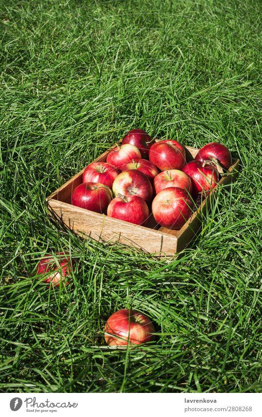 Flatlay with fresh ripe red apples in wooden box Seasons Summer Autumn Apple flat lay Grass Wood Box Farmer Mature Colour Fresh Exterior shot Diet Fruit