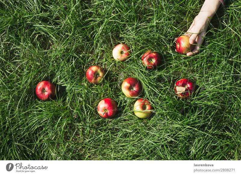 Woman's hand and red ripe organic apple on grass Nature Healthy Eating Summer Plant Colour Green Red Hand Sun Food Autumn Grass Garden Fruit Fresh