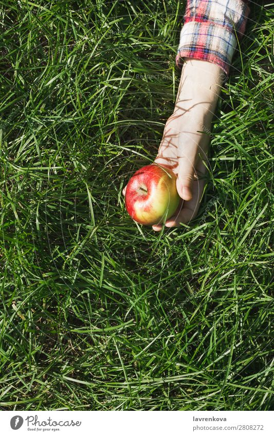 Woman's hand in plaid shirt holding red apple on grass Checkered Nature Picnic Pick Apple Hand Grass Colour Meadow Exterior shot Organic Background picture