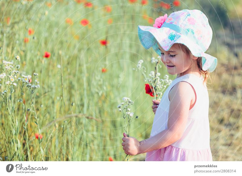 Lovely little girl in the field of wild flowers Woman Child Human being Nature Summer Plant Colour Beautiful Green White Flower Joy Lifestyle Adults Blossom