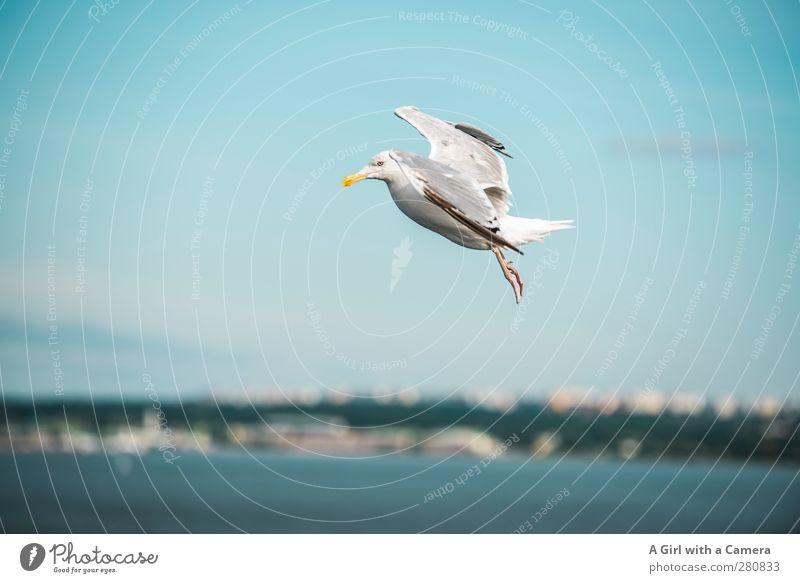 Blue Ocean Animal Movement Coast Bird Wild animal Fly Fresh Free Seagull Hover