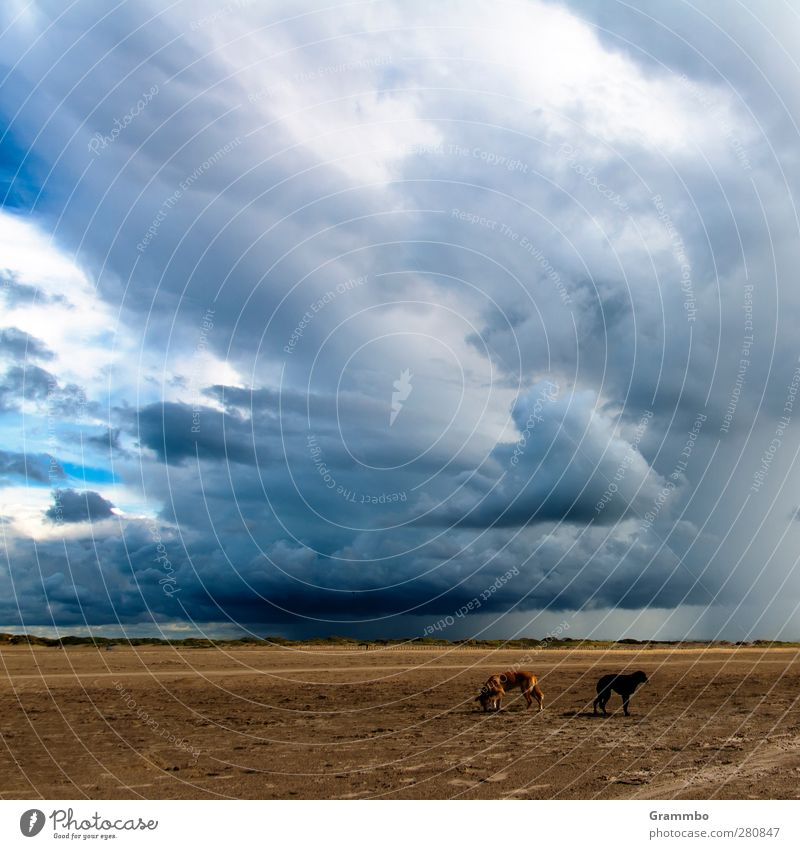 In a suit Storm Animal Dog 2 Threat Beach Storm clouds Regen County Colour photo Exterior shot Day