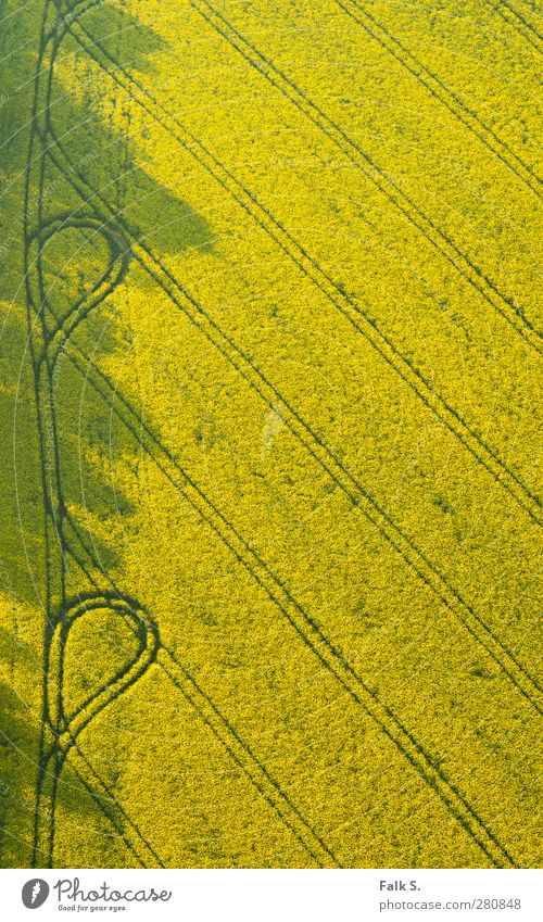 [Rape]ody with loops Environment Plant Sunlight Spring Canola Field Agriculture Tracks Lanes & trails Simple Infinity Warmth Yellow Warm-heartedness Calm