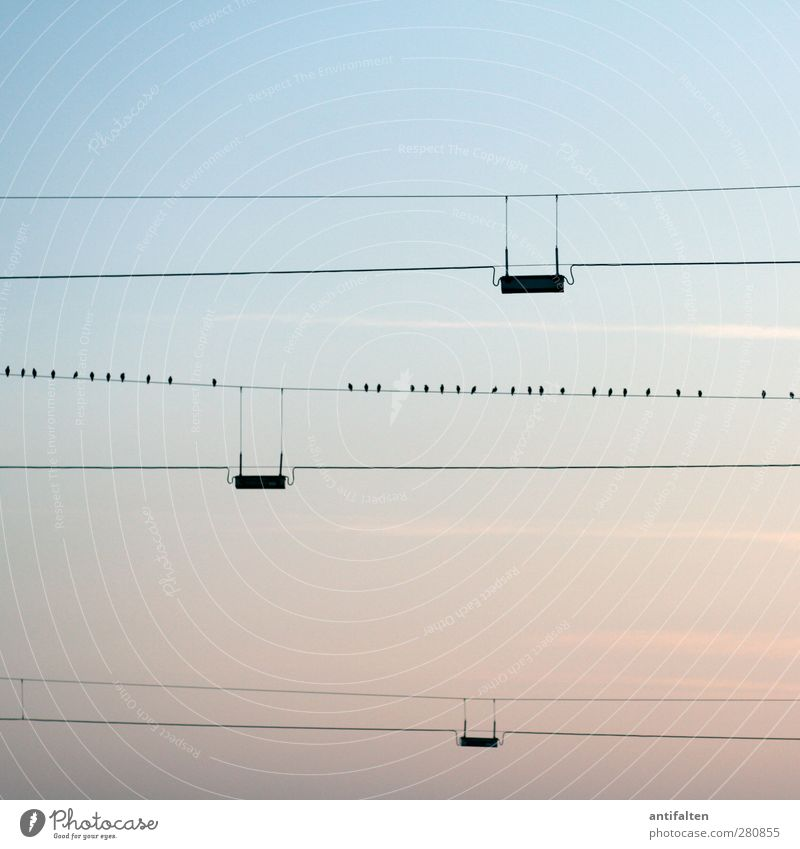 32 Cable Nature Cloudless sky Sunrise Sunset Summer Outskirts Steel cable Animal Bird Group of animals Blue Parallel Line Dusk Twilight Evening sun