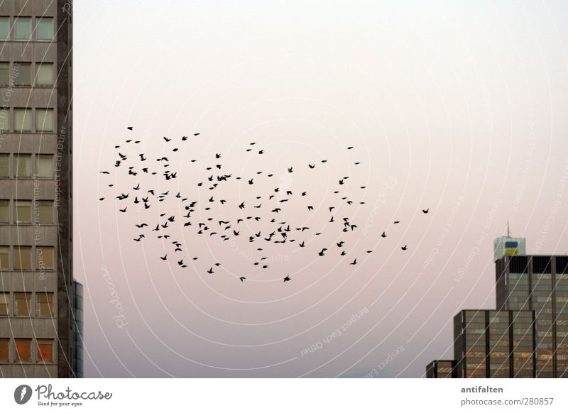Sky City Summer Animal House (Residential Structure) Window Wall (building) Gray Wall (barrier) Bird Brown Pink Flying Power Facade High-rise