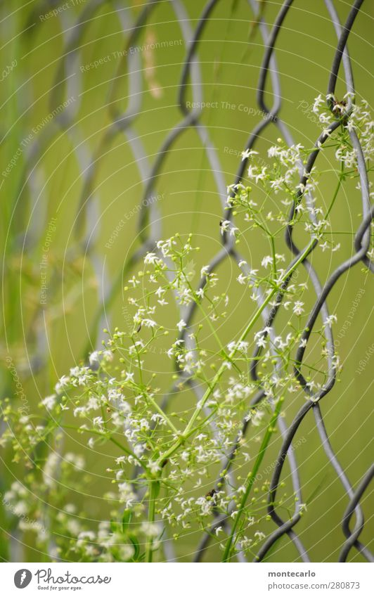 Nature Green Summer Plant Flower Environment Grass Blossom Natural Wild Authentic Fresh Simple Dry Thin Fence
