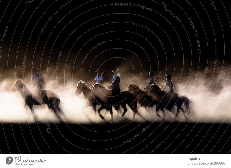 Tölting Icelanders Human being Group Event Rider Horseman's Festival Sand Dust Cloud of dust Iceland Pony Movement Illuminate Esthetic Natural Wild Brown Black