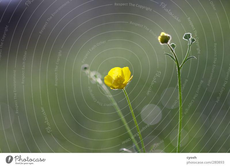 Nature Beautiful Summer Plant Sun Flower Calm Yellow Dark Meadow Life Spring Blossom Energy Illuminate Blossoming